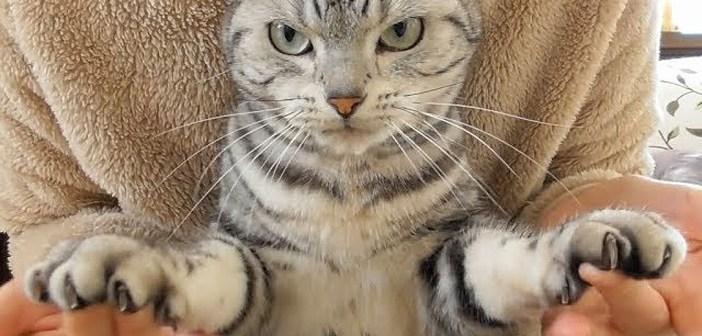 爪を切られてドンドン目がすわっていく猫。何かを訴えかけるような表情が妙に可愛かった ( *´艸`)♡