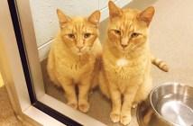 住む家を失った猫達