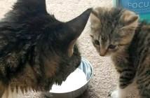 子猫との出会い