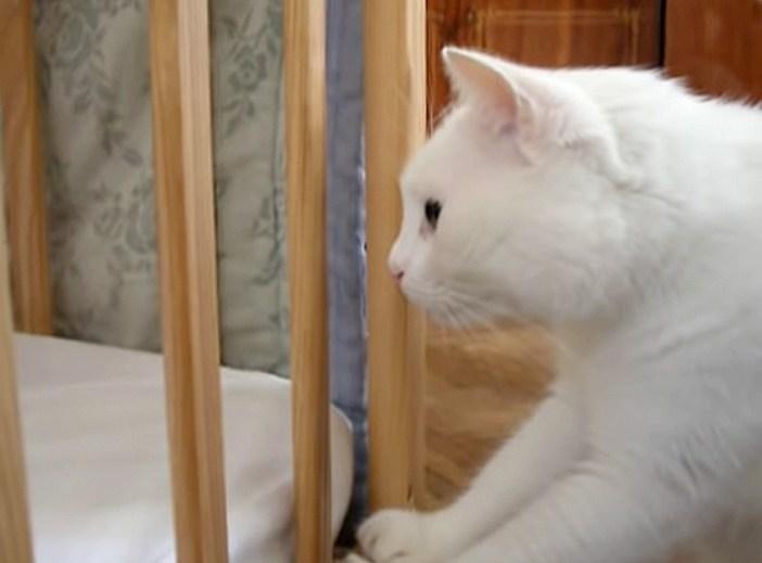 まじまじと見つめる猫