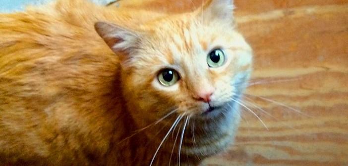 玄関にきた猫