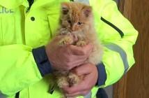 猛吹雪の中の子猫