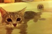 湯船に浸かる