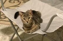 家にいた猫