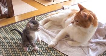 子猫の成長の記録