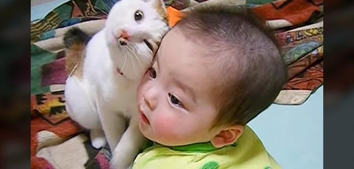 赤ちゃん好きの猫