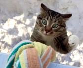 「ただいま〜!」帰宅した猫さんに窓からロープを垂らしてみると、物凄い勢いで登ってきた (*゚0゚)!