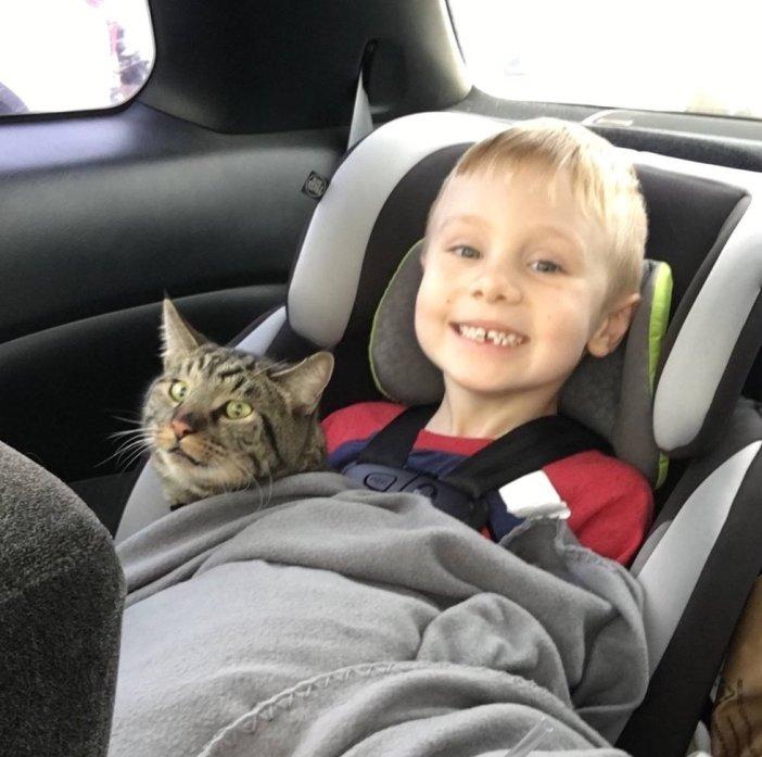 車に乗る猫と少年