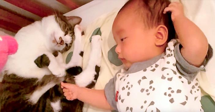 シッポでトントンしながら、赤ちゃんを優しくあやす猫さん。幸せそうな ...