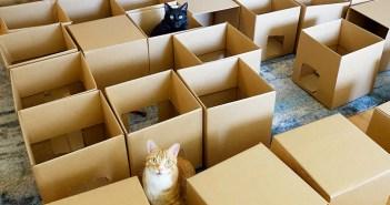 50個のダンボールと猫