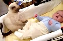 足を押さえる猫