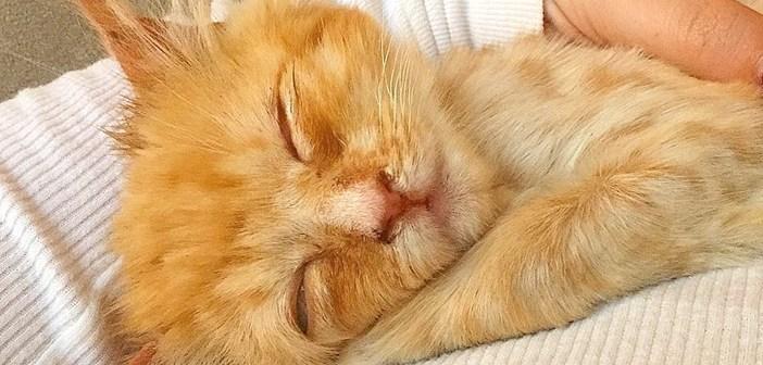 ボサボサの子猫