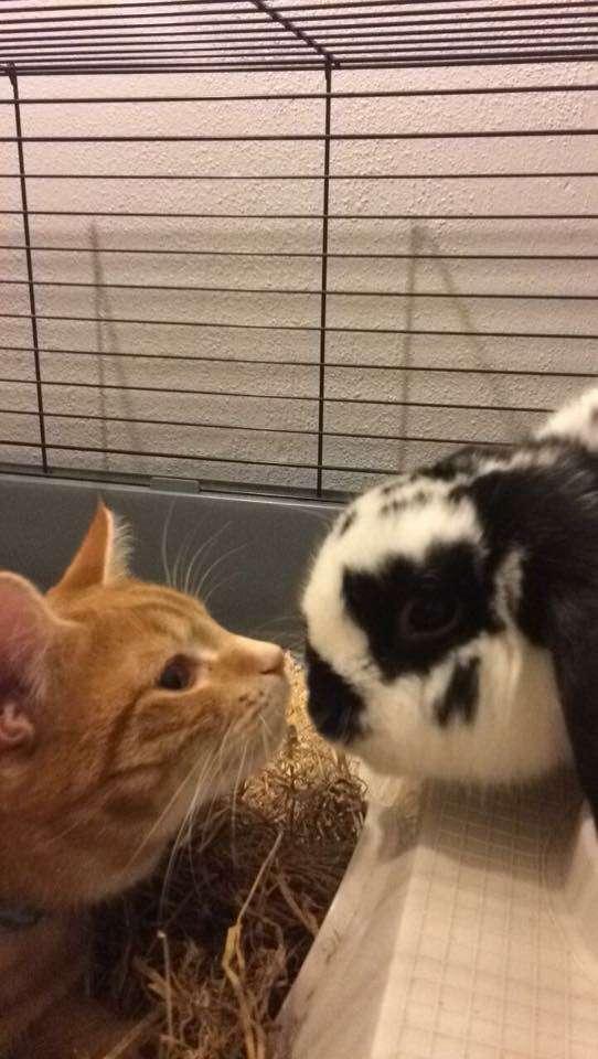 接近するうさぎと猫