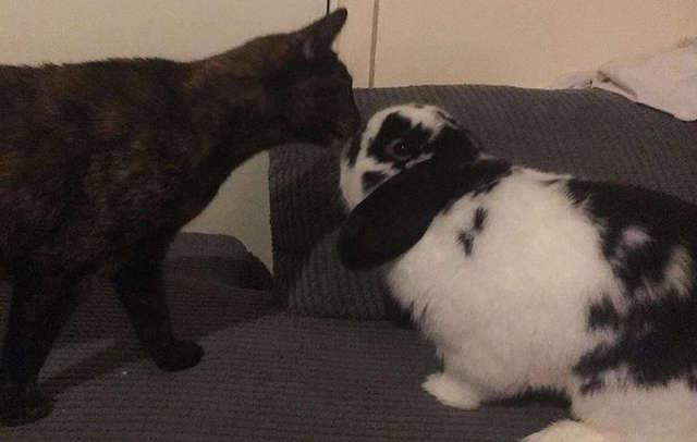 挨拶するうさぎと猫