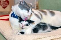 子猫好きの猫