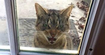 玄関前に現れた猫