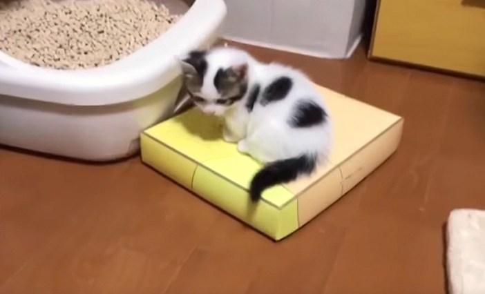 トイレの前の子猫