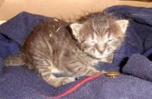 寒さの中から保護された子猫