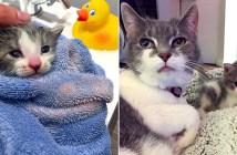 猫のおばあちゃんと子猫