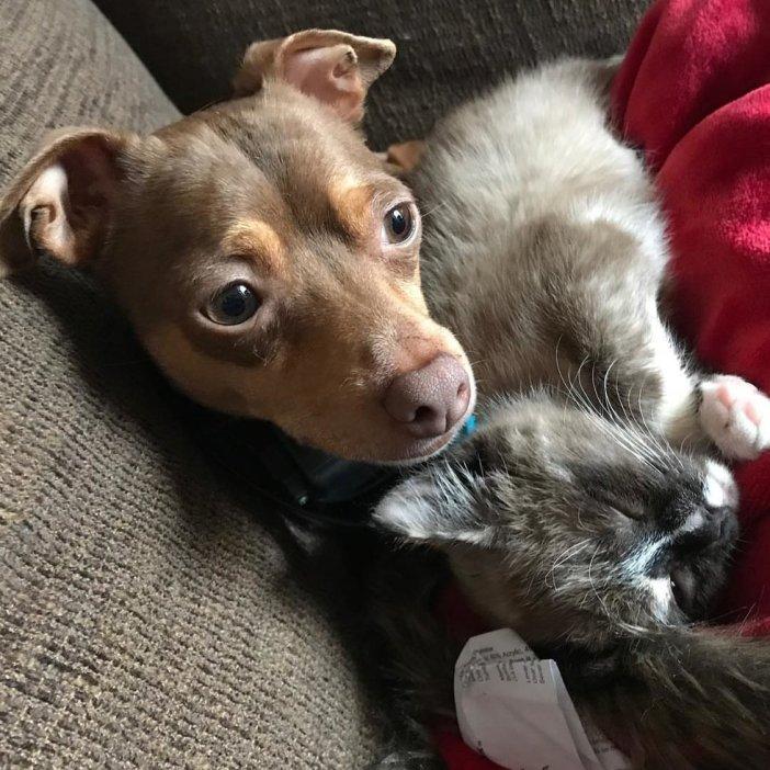 同居犬と子猫