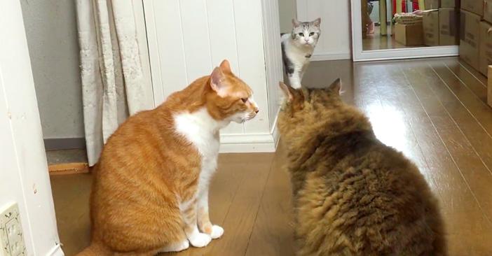 ケンカを目撃した猫さん