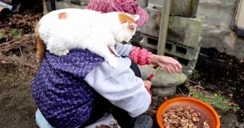 くるみ餅とおばあちゃんと猫