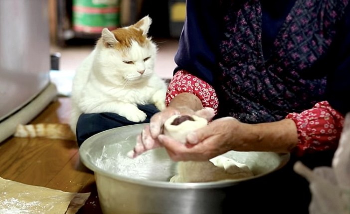 まんじゅう作りを見つめる猫