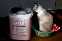 餅つき機を見守る猫
