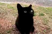 近づいてきた黒猫