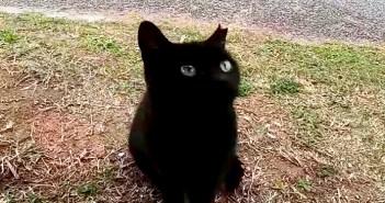 猫の集会所に集まっていた野良猫をナデナデしていたら、黒猫の子猫が遠慮がちにモフモフされにやって来た ( *´艸`)♡