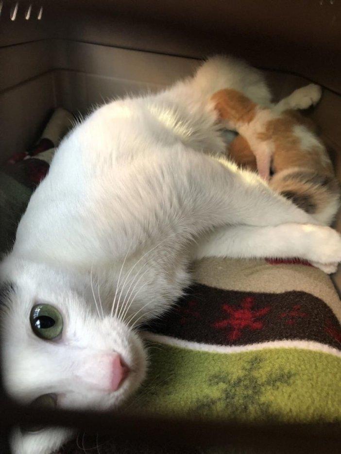 子猫と母猫