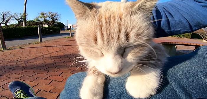 モフモフされたい猫