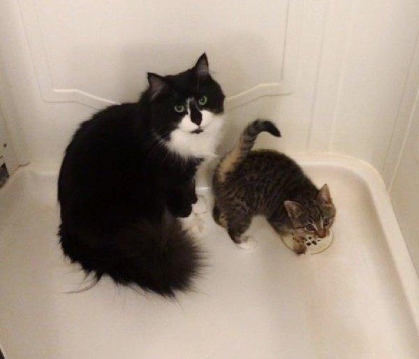 見上げる猫と子猫