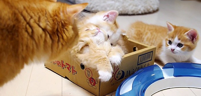 子猫のピンチに駆けつけた母猫