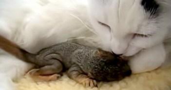 リスを救った猫