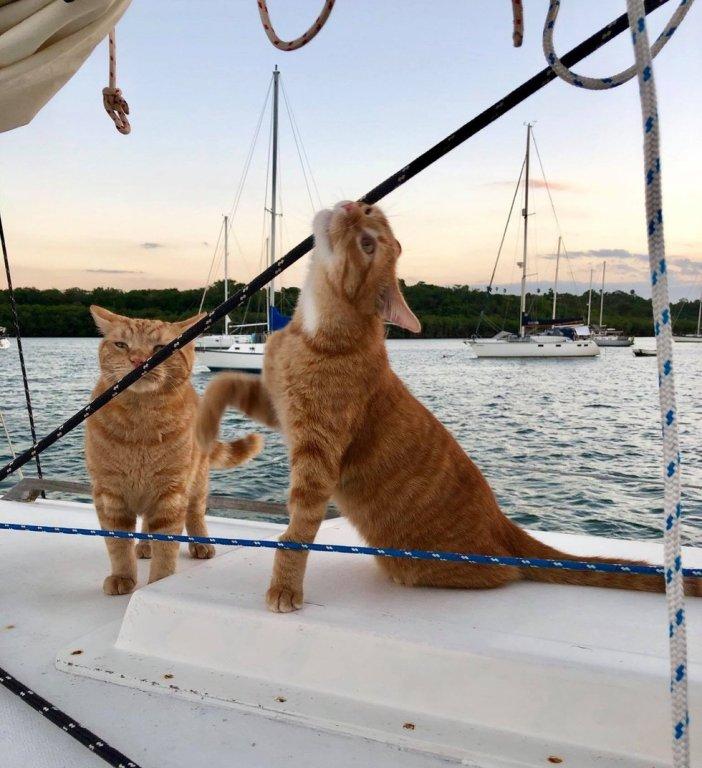 ボートの上の猫