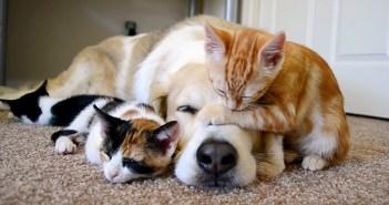 仲良しな犬と子猫達