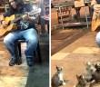 歌に聞き入る子猫達