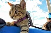 旅に出る猫