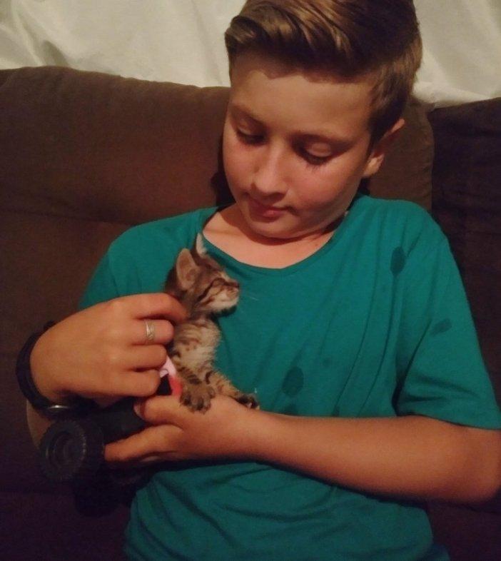 幸せな子猫と男の子