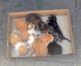 7匹の迷子の子猫を助け出した男性。母猫が絶対に戻ってくると信じて何時間も待ち続けると、とっても幸せな光景が (*´ェ`*)