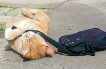 飼い主さんを行かせたくない猫
