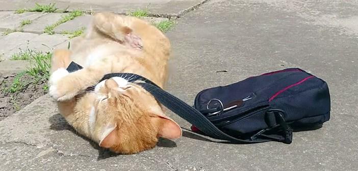 どうしても飼い主さんを仕事に行かせたくなかった猫さん。家の外で可愛い抵抗に出た ( *´艸`)♡