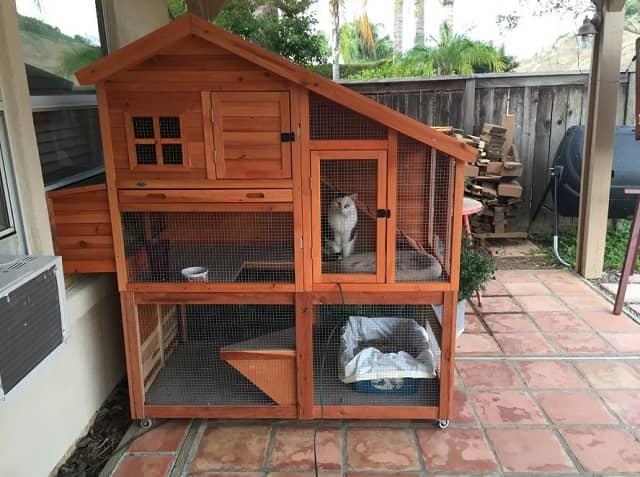 ニワトリ小屋と猫