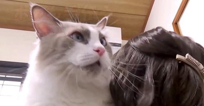 抱っこ好きの猫