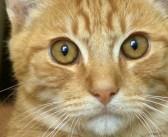 保護された直後から、食事が喉を通らなくなった猫。その愛情深い原因に思わず胸が熱くなる