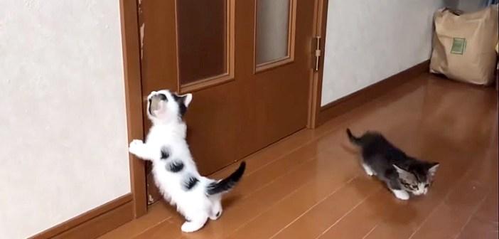 ドアを開けて欲しい子猫