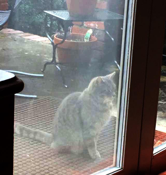 窓の外の猫