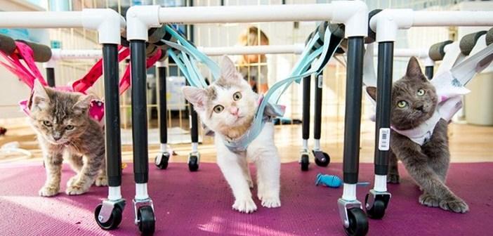 歩行器と子猫