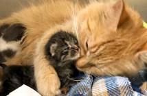 母猫代わりになった猫